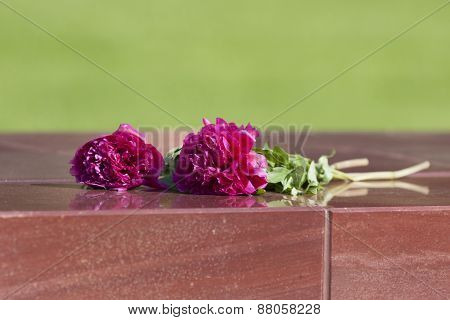 peonies flowers lying on a granite slab