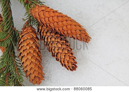 Fir Cone On A White Snow Background.