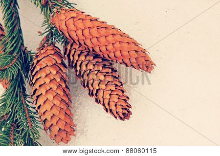 Fir Cone On A White Snow.toned Image.