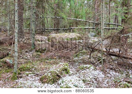 Snow Covered Forest Trails In Spring