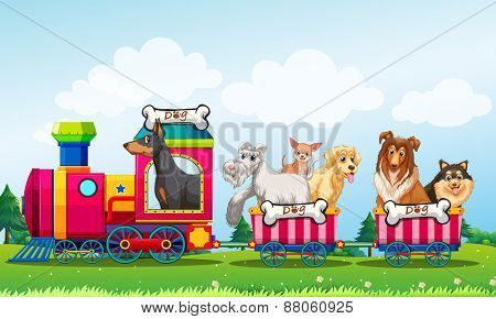 Dogs riding on the train