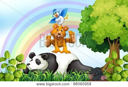 Animals relaxing in the field with rainbow background