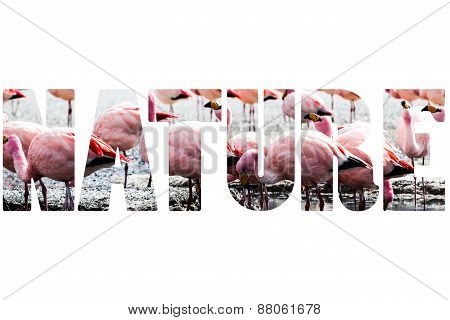 Word Nature Over Pink Flamingo.