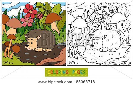 Coloring Book (hedgehog)
