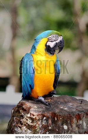Photo Blue Macaw