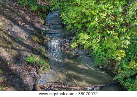 Stream At Seahurst Park