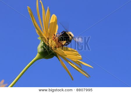 Bee On Take Off