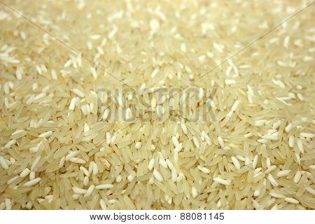 Jasmine Rice Grain With  Closeup Shot.