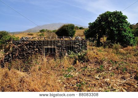 Abandoned Stone Home And Cashew Tree