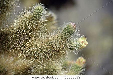 sticky blooms
