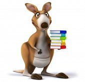 stock photo of kangaroo  - Fun kangaroo - JPG