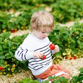pic of strawberry blonde  - Funny little blond kid boy picking and eating strawberries on organic bio berry farm in summer on warm sunny day - JPG