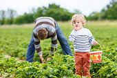pic of strawberry blonde  - Young father and little son on organic strawberry farm in summer picking berries - JPG