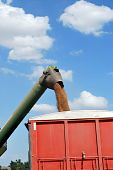 pic of auger  - Green wheat Auger unloads wheat grain into red wheat truck - JPG