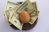 pic of bird egg  - American dollars and an egg in a bird - JPG