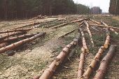 pic of deforestation  - Environment nature and deforestation forest concept  - JPG