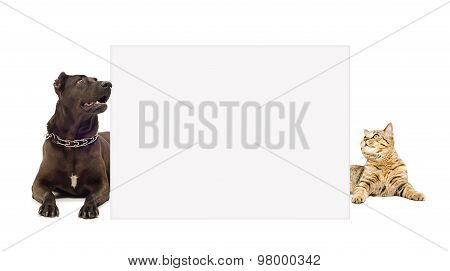 Dog and cat lying peeking from behind banner