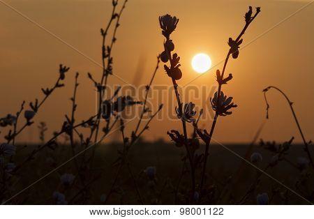 Rising Sun Through Wild Flowers