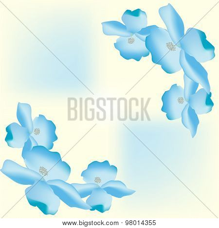 Large flower petals floral background
