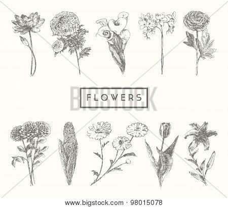 Trendy collection hand drawn flowers floral set