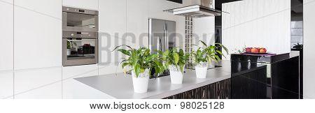 Flower Pots On The Worktop
