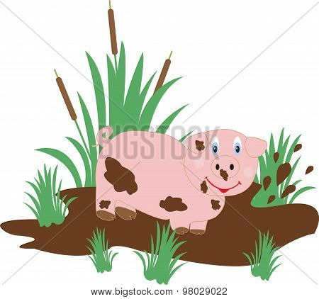 Funny Pig In The Swamp
