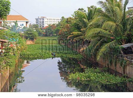 overgrown water channel in Vientiane