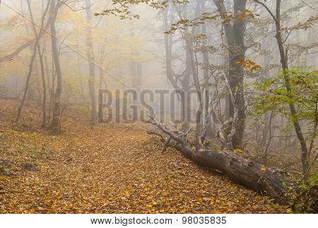 Foggy forest landscape in Crimean mountains