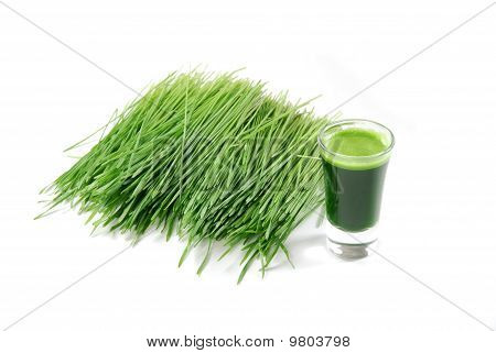 COPITA de Wheatgrass