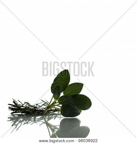 Rosemary Branch And A Cluster Of Sage Leaves