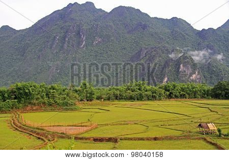 rice field against the background of limestones