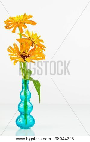 Zinnia Flowers In Blue Vase.