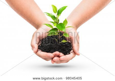 Green plant in a child hands isolated on white