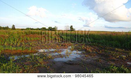Edge Of Rural Road