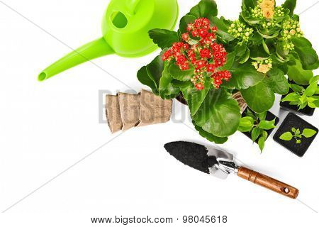Garden equipment with green plant and flower isolated