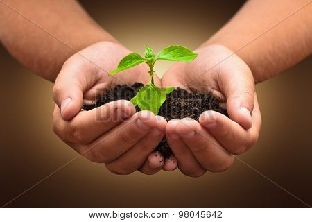 Green plant in a child hands on dark background