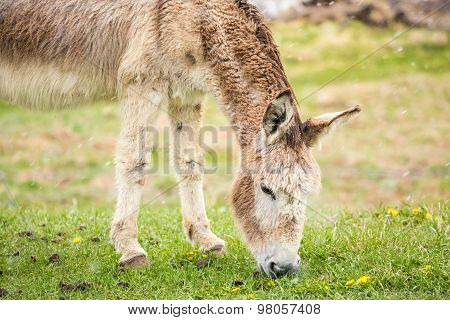 Cute, Furry Donkey