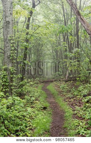 Appalachain Trail In Shenandoah In The Fog