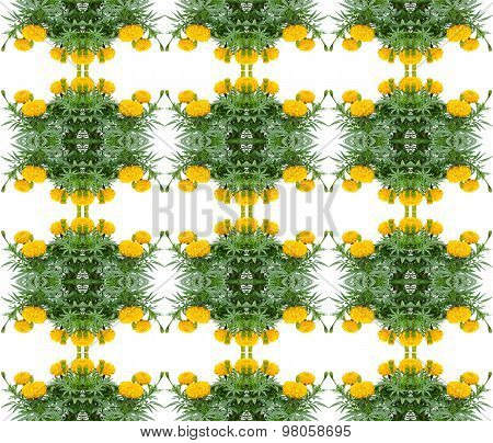 Marigold Seamless Pattern Background