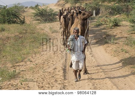Indian Nomad Attended The Annual Pushkar Camel Mela