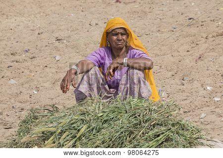 Portrait Indian Woman. Pushkar, India