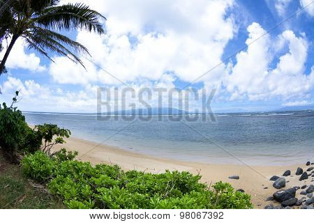 View of a tropical beach from the cover of vibrant, green foliage and palm trees