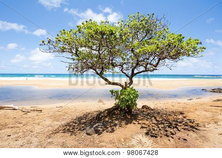 A lone tree on a Hawaiian beach framed by a bright blue sky and turquoise ocean.