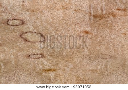 Close up photo of wood grain knot texture,great for background layers