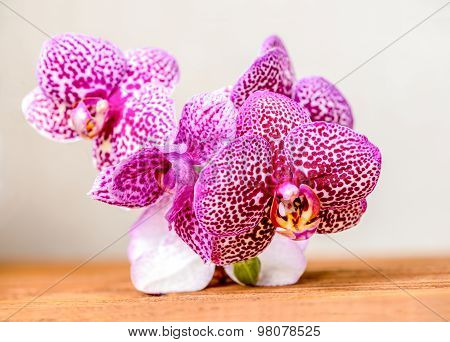 Beautiful Composition Of Blooming Twig Lilac Spotty Orchid Flower, Phalaenopsis On Wooden Background