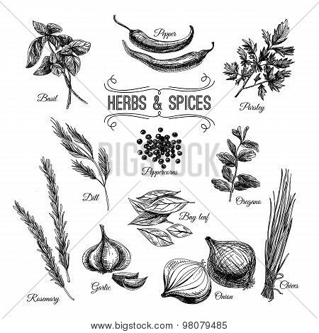 Vector hand drawn set with culinary herbs and spices.