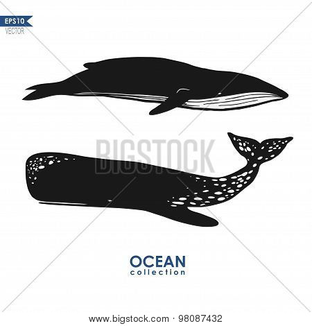 marine mammals: cachalot and big blue whale