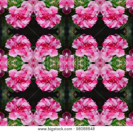 Desert Rose Flower, Adenium Obesum Seamless Pattern Background