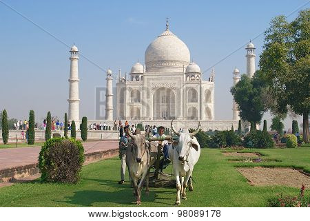 People cut grass with a bull ridden lawn mover at Taj Mahal in Agra, India.
