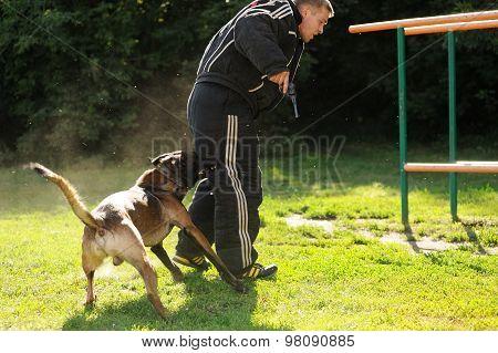 Orel, Russia, August 01, 2015: Mumu Fest, Turgenev's Story Art-festival, Police Dog Handler Show, Do